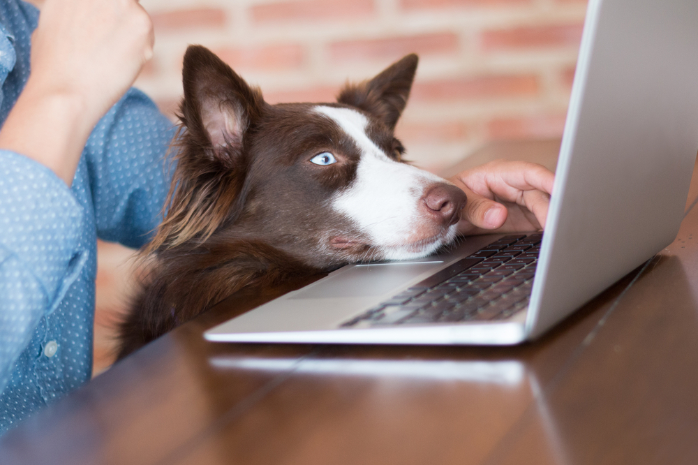 dog and owner looking at laptop new patient center