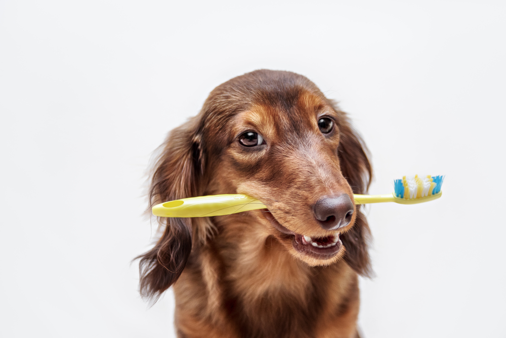 Worried about your pet's dental hygiene? Our Canton veterinarian can help provide pet dental care such as cleanings and check-ups. Call us today!