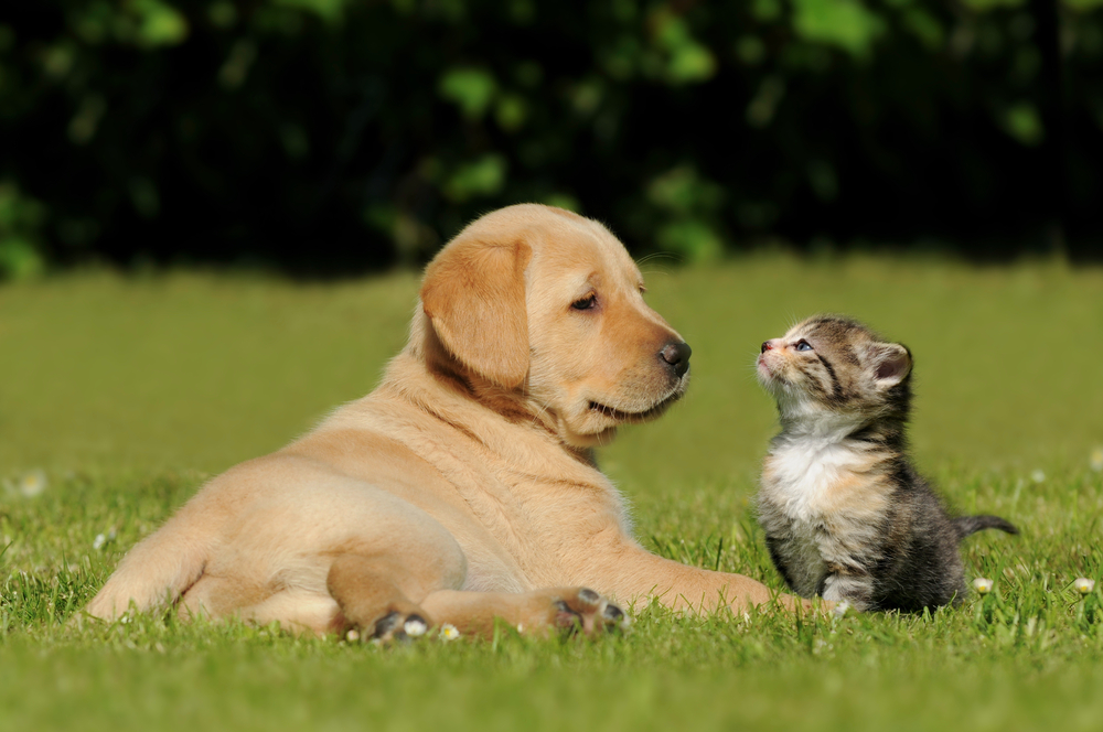 A puppy and cat having a great time in the grass